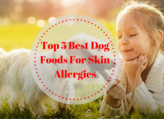 Best Dog Foods For Skin Allergies