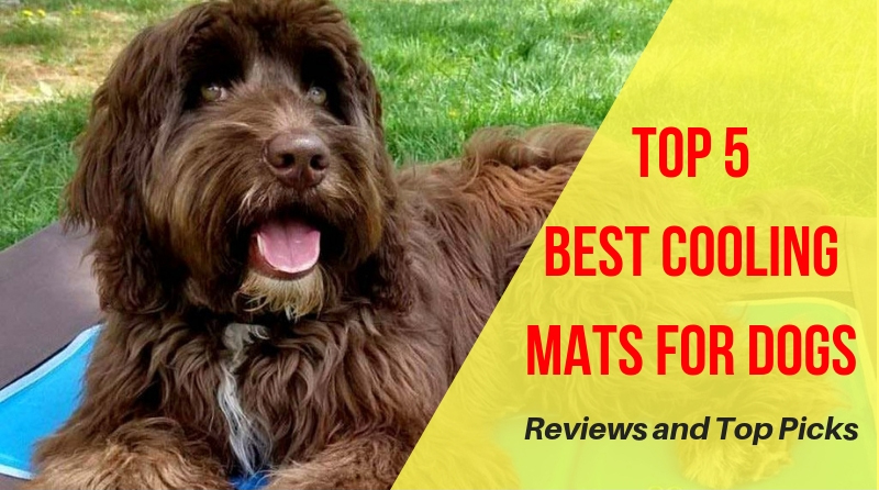 Best Cooling Mats For Dogs Reviews Top 5 Picks In 2019