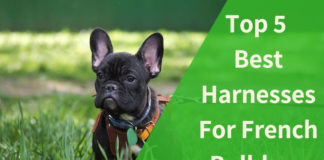 Best Harnesses For French Bulldogs