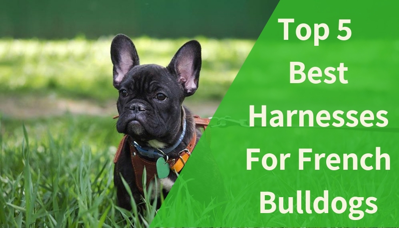 The Best Harnesses For French Bulldogs [Top 5 Picks In 2019]