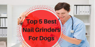 Best Nail Grinders For Dogs