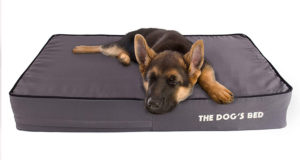 Orthopedic Dog Beds With Memory Foam