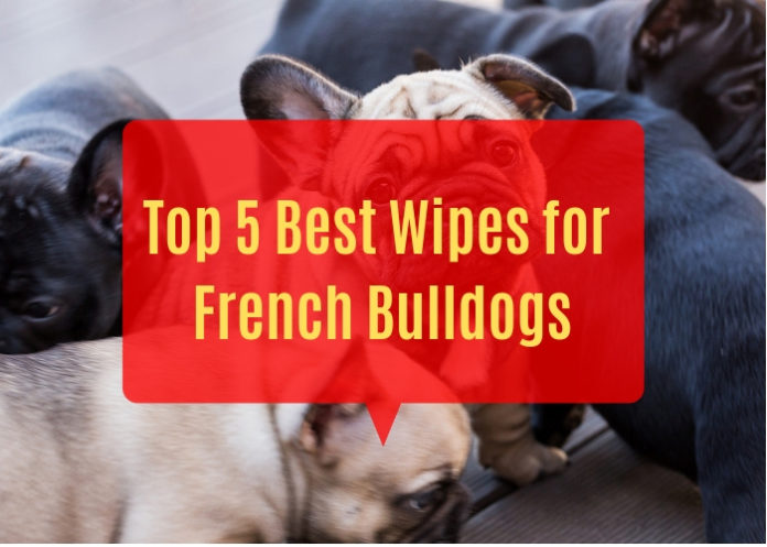 Best Wipes for French Bulldogs