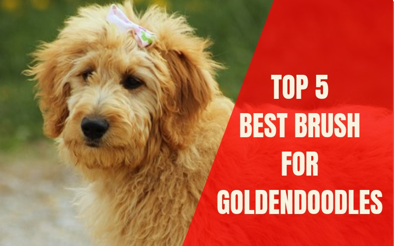 5 Best Brush For Goldendoodle Puppies In 2020 Best Dog