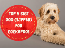 Best Dog Clippers for Cockapoos