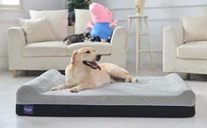 Best Dog Beds for Goldendoodles